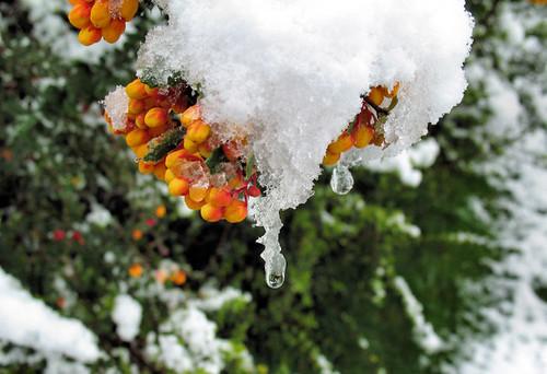 April snow 3117