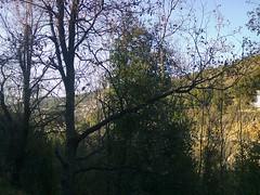 Décor pour le vent du soir (Gilbert-Noël Sfeir Mont-Liban) Tags: kesserwan montliban liban mountlebanon lebanon arbres trees winter hiver