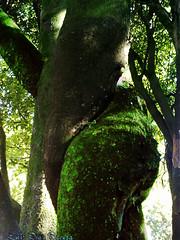erotic tree / árbol erótico (Luis Diaz Devesa) Tags: españa tree sexy sex female naked spain europa europe erotic nu curves sexo galicia galiza árbol trunk amusing tronco pontevedra desnudo erotique curvas divertido erotico 色情 vilagarciadearousa エロ ヌード villagarciadearosa 裸體, luisdiazdevesa rememberthatmomentlevel1 sesynature árbolerótico 、セクシー、