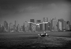 Free As A Bird (noamgalai) Tags: city nyc sea ny newyork bird water skyline photography boat fly flying photo seagull picture photograph   allrightsreserved   photomania  noamg  noamgalai   wwwnoamgalaicom sitelandscapes