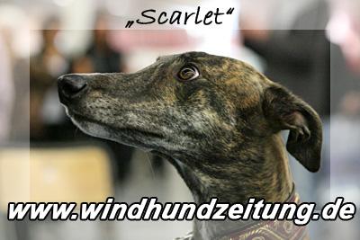QL9T1767 Scarlet