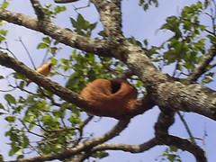 bicho casa joao de barro 01 nilceia gazzola (nilgazzola) Tags: brazil brasil de foto ou com tirada maquina echapora nilgazzola