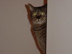 WatchfulLuke