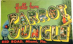 Hello from Parrot Jungle postcard (Smaddy) Tags: hello usa flower bird vintage garden pheasant florida miami postcard flamingo parrot tourist 1950s tropical fl cockatoo peafowl attraction 1951 bigletter parrotjungle greetingsfrom largeletter goura ctartcolortone
