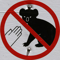 Squared Circle - no touching koalas
