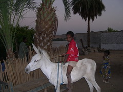 Nubian Kid on Donkey (upyernoz) Tags: kids egypt donkey  nubianvillage