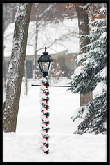 Lamp Post (wishymom (Stephanie Wallace Photography)) Tags: christmas winter decorations light snow lamp weather outdoors holidays garland lamppost hero winner 15challengeswinner photofaceoffwinner thechallengegame challengegamewinner pfogold