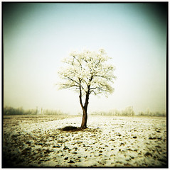 Big calm (Thomas Solecki) Tags: tree landscape holga kodak calm vanilla portra