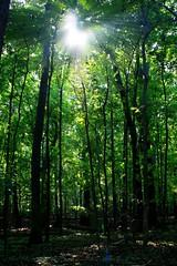 (Mandana (on and off)) Tags: sun nature forest rays themoulinrouge magicdonkey avision