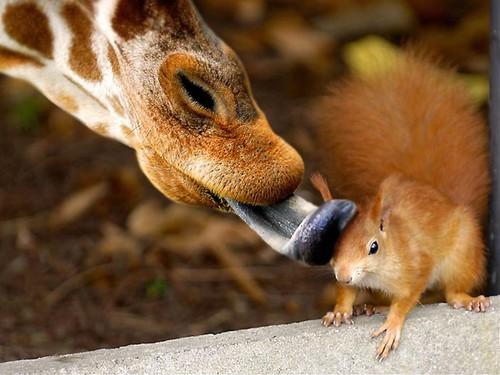 giraffesquirrel.jpg