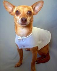 1+1=ONE Reversible jacket (designsbyone) Tags: summer dog pet fashion clothing khaki yellowjacket apparel 11one velmakelly spring2008
