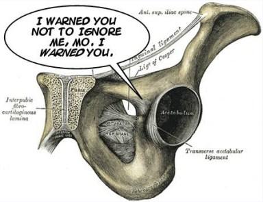pubic symphysis
