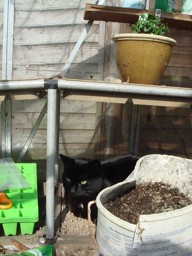 Timmy curls up on a sunny shelf in the greenhouse