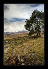 Highland Tree (Jim Gove) Tags: tree landscape scotland nikon angus glen glenclova hdr clova d80 absolutelystunningscapes