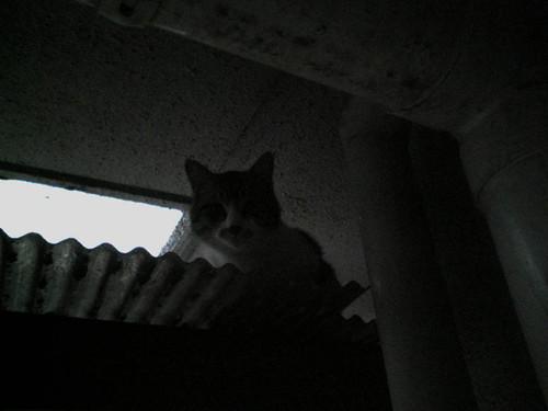 Cat_2008-05-14