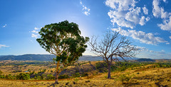 To be, or not to be (RobMacPhotography) Tags: landscapes trees hills mountains golden grass dead alive silhouette sunset fields blue sky clouds glow sun summer canberra act australia kambah urambi sony a6000 rob mac photography tmt