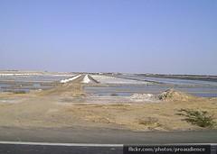 Kutch Salt Farms