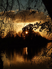 Trees and sun (Federilli) Tags: sunset thames river tramonto fiume richmond volunteering naturalmente bctv volontariato greengym diamondclassphotographer flickrdiamond bigforeshoreclearup