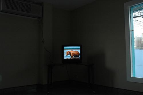 bear on tv motel lobby_1 web