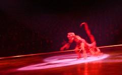 Schorpioen // Scorpio (italiaan1) Tags: cold hasselt kleurrijk iceshow koud colourfull ijsrevue