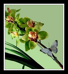 "PRECISAMOS DE SUA AJUDA - FLICKR (claudio.marcio2) Tags: orchid flower flor aid breathtaking ajuda excellence orquídea naturelovers naturesfinest allyouneedislove awardwinner excellenceinfloralphotography goldenmix creativephotos mywinners anawesomeshot impressedbeauty ithinkthisisartaward diamondclassphotographer wowiekazowiegroup thenaturegroup flickrelite photomiami allnicethink ""wonderfulworldmix"" ""macromix"" theperfectphotographer astoundingimage photonawardsgroup littlestoriespicswithsoul"