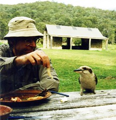 Hungry Kooka (Merryjack) Tags: australia scan nsw flyfishing snowymountains kookaburras feedingbehaviour merryjack dacelonoveagineae