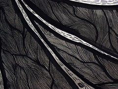 severed wing closeup