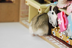 Where is my hat? (EricFlickr) Tags: christmas xmas pet pets cute animal animals taiwan hamster