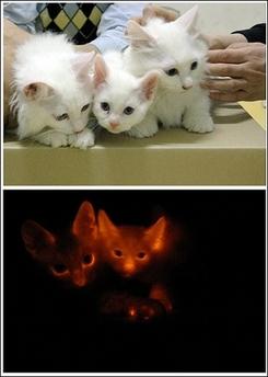 cloned_cat