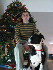 Hugo, Clover, and our big-ass Christmas tree