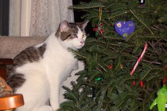 Victor at Christmas