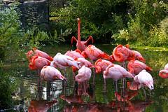Flamingo Aerobics (Property#1) Tags: pink toronto ontario canada bird nature animal photo fdsflickrtoy