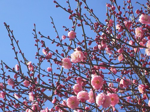 春はそこまで
