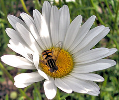 Preview of Summer (John Stenberg) Tags: flowers summer flower gardens bug garden bugs preview