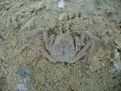 Crab-P1050671