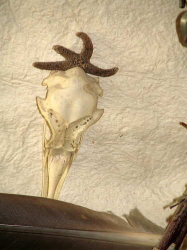 Skull & Feather, detail of Courage Shield, created 1992, Minneapolis, Minnesota,photo © 2008 by QuoinMonkey. All rights reserved.