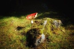 Forest // Wald (gerdschremer) Tags: natur nature tranquility forest wald flyagaric fliegenpilz