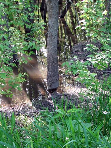 Eager Beaver (1/2)