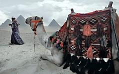 EGYPT19/ (a PSYCHIATRIST'S view) Tags: sphinx shisha egypt nile cairo pyramids aswan luxor souks camels hooka glosack