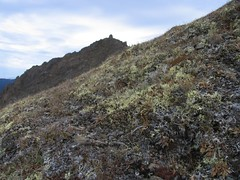 Lichen heath tundra on Buckhorn Mountain
