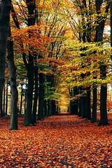 Autumn Feelings (buteijn) Tags: autumn holland fall utrecht herfst nederland bos debilt beerschoten beukenlaan aplusphoto stroopwafelsactions