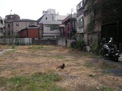 [渋谷]空き地とネコ