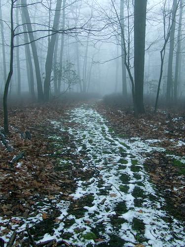 moss footprints