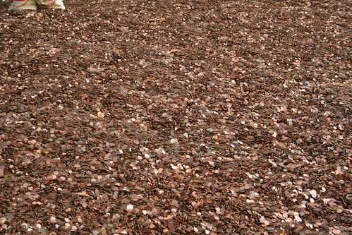 Penny Harvest Field