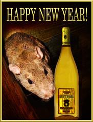 HAPPY 2008!!!! (birdtoes) Tags: new pet pets animal animals rodent rat year celebration 2008 rodents whee ezekiel happynewyear ratty auldlangsyne haveadrink int