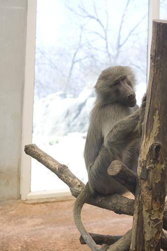 teh zoo