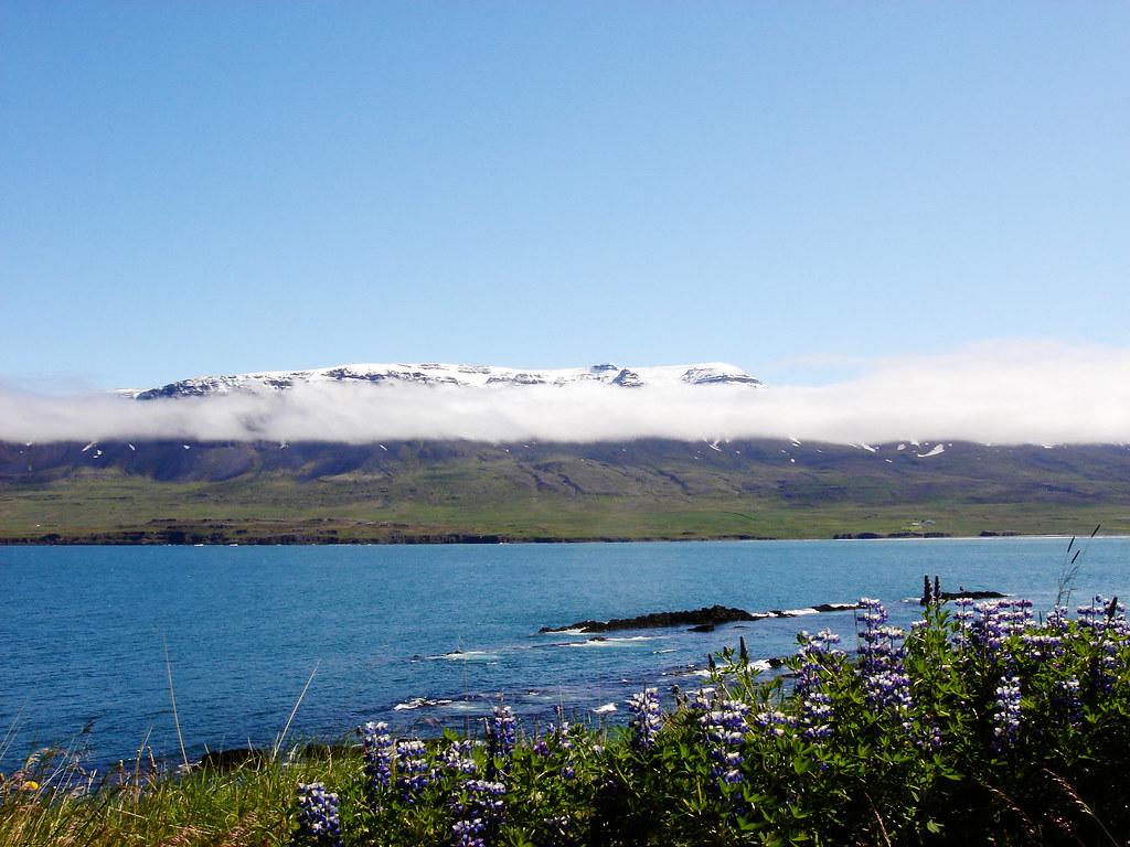Vopnafjörður and the flowers