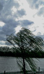 Wind (joehall45) Tags: sky clouds wind willow tre magiceye naturesfinest