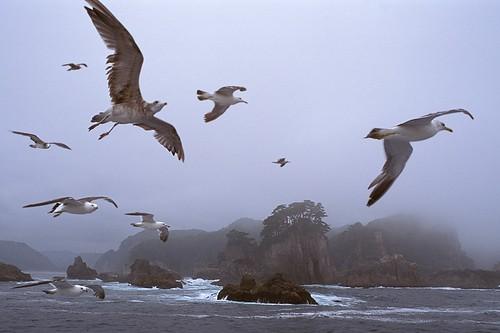 Gaviotas que vuelan