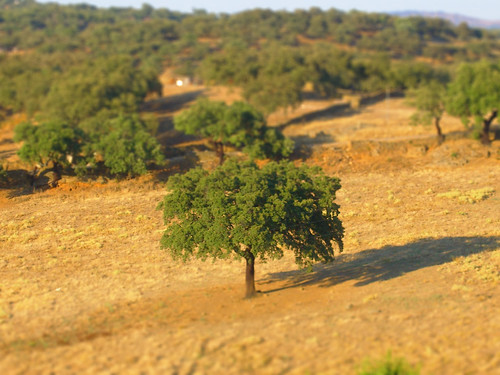 Extremadura Tree Tilt-Shift